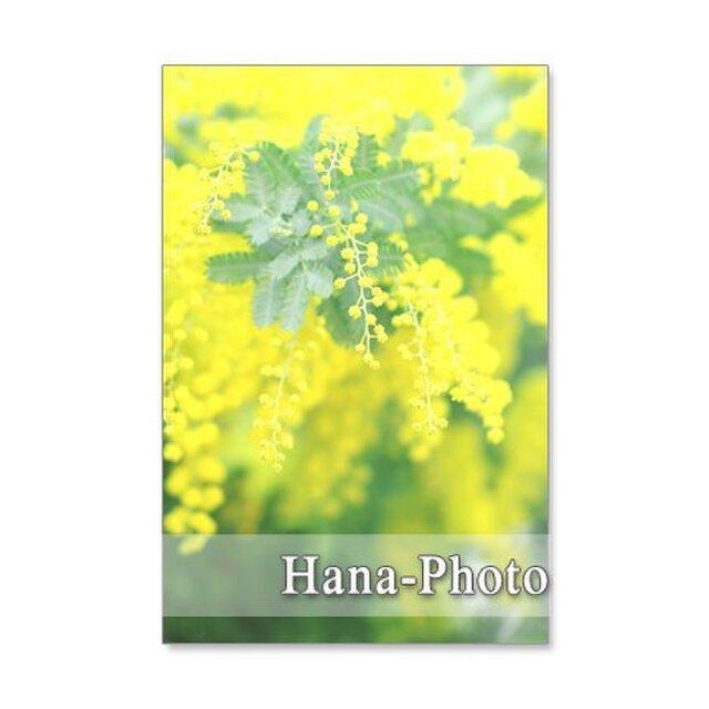 1064)大好きなミモザ  5枚組ポストカードの画像1枚目