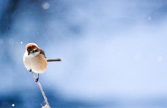 小さな猛禽・Nature photo frameの画像1枚目