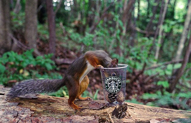 コーヒーブレイク・Nature photo frameの画像1枚目