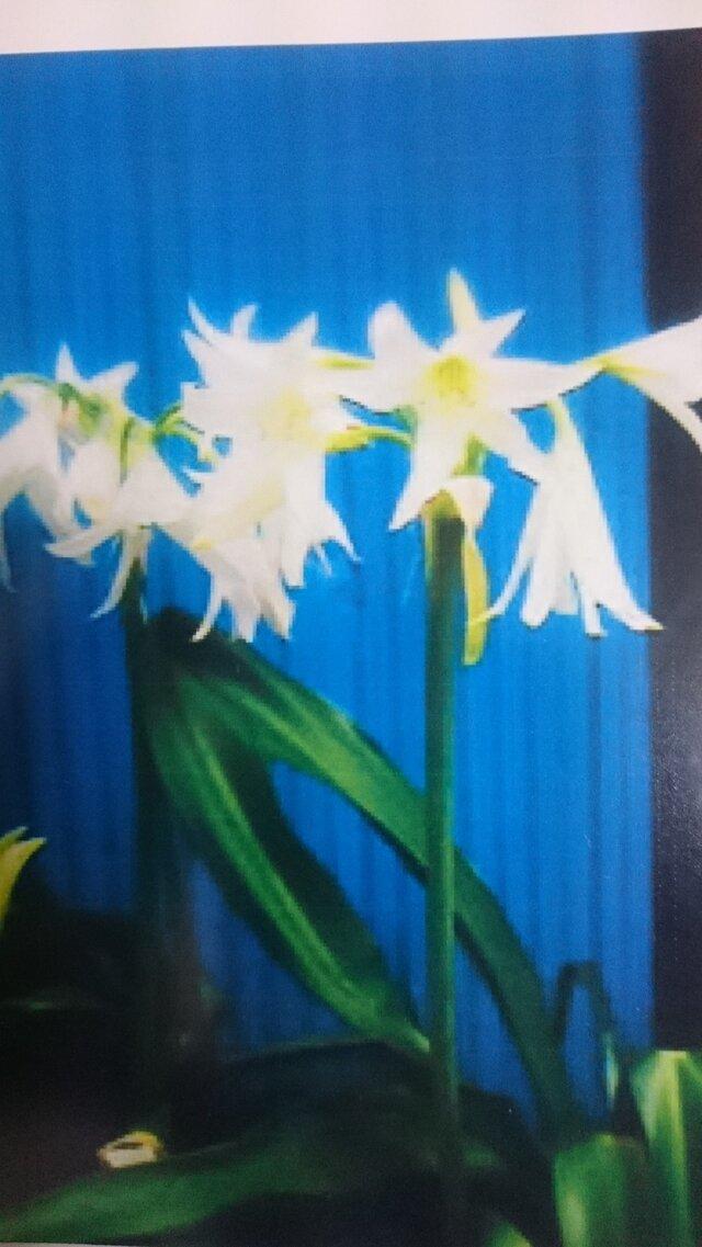 花のポストカード  フラワー   雑貨  写真  はがき  文具の画像1枚目