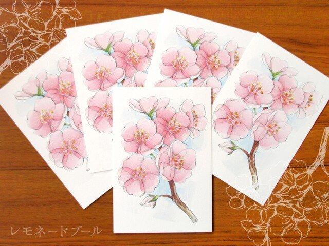 桜ポストカード★5枚セットの画像1枚目