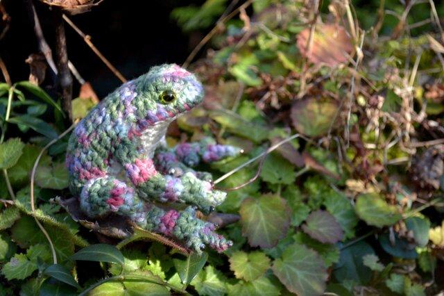 春を待つカエルの画像1枚目