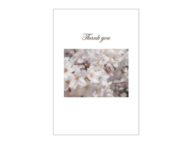 桜の39cardの画像1枚目