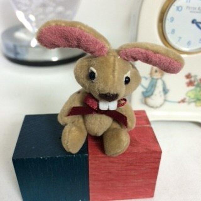 ミニチュア ウサギのリオナの画像1枚目