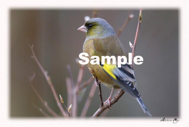 No.004  身近な野鳥たち その1 ポストカード5枚組 の画像1枚目
