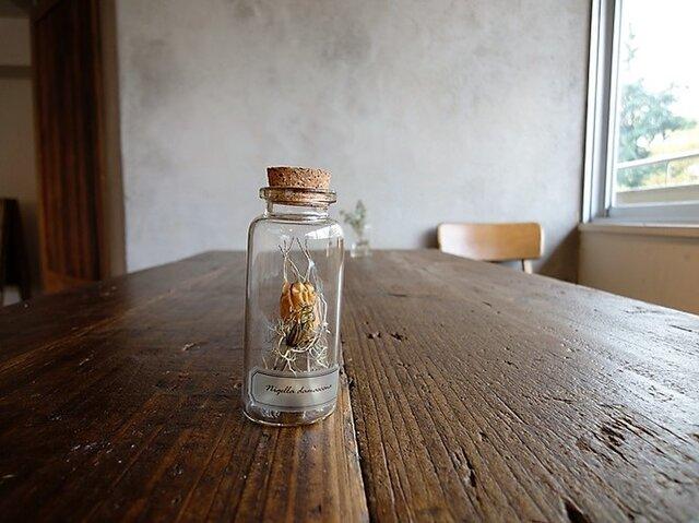 【展示のみ】植物標本 Botanical Collection■No.5-A ニゲラの花 ホワイトの画像1枚目