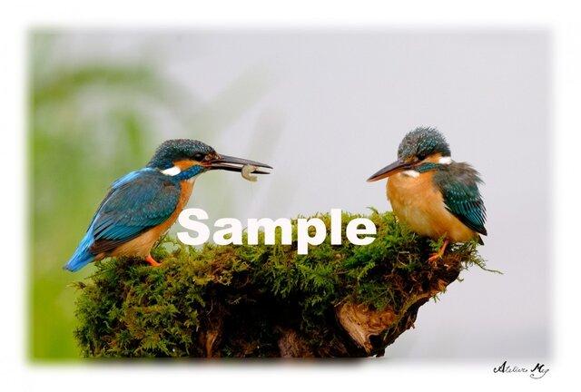 No.009  野鳥 その1 ポストカード5枚組 の画像1枚目