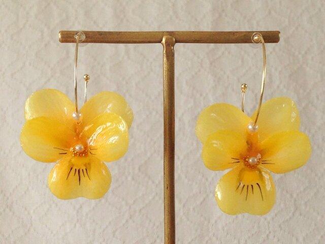 染め花を樹脂加工したビオラのフープピアス(M・イエロー)の画像1枚目