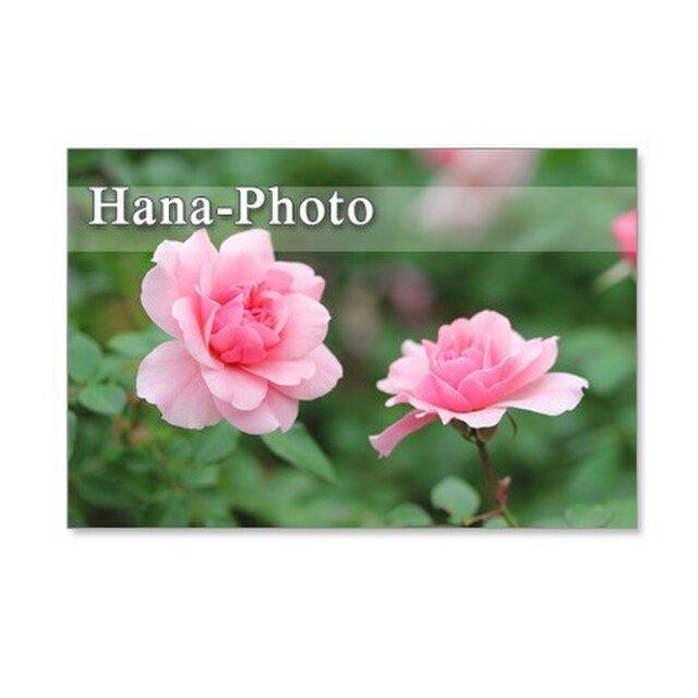 1088) 美しいバラ ポストカード5枚セットの画像1枚目