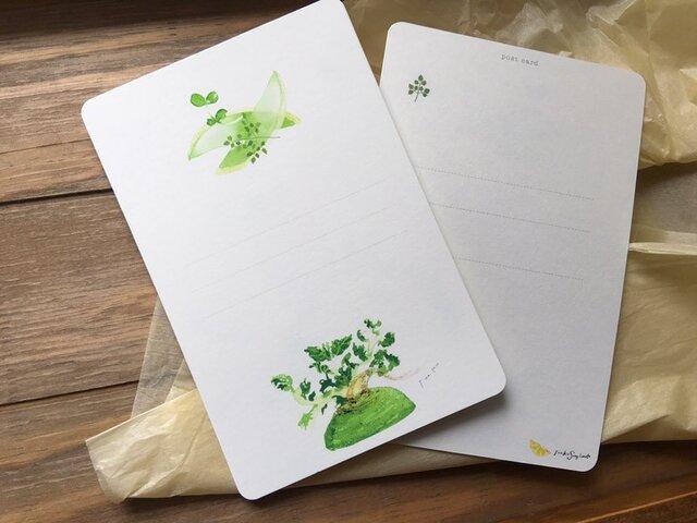 Fresh Vegetables ビタミン大根のカードの画像1枚目