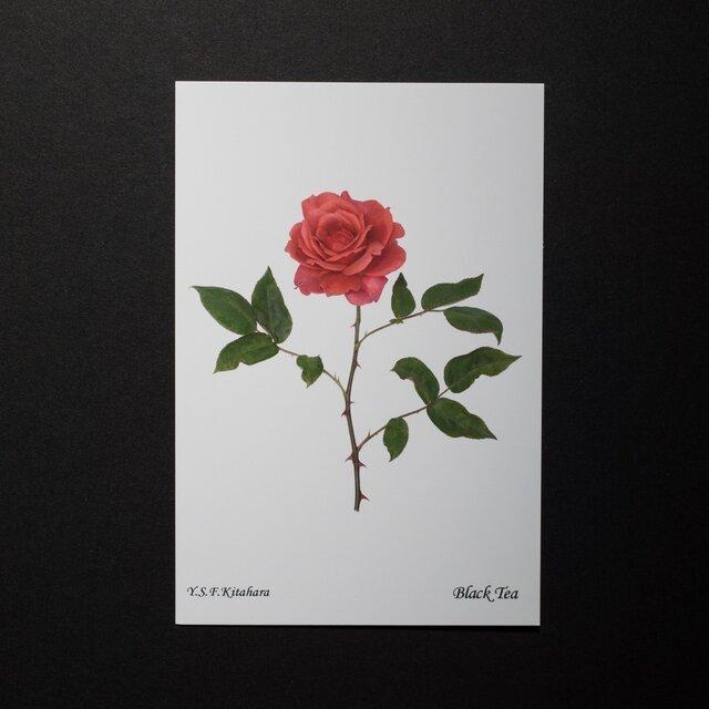 バラのポストカード ブラック・ティーの画像1枚目