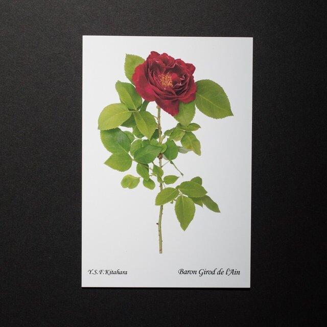 バラのポストカード バロン・ジロード・ランの画像1枚目