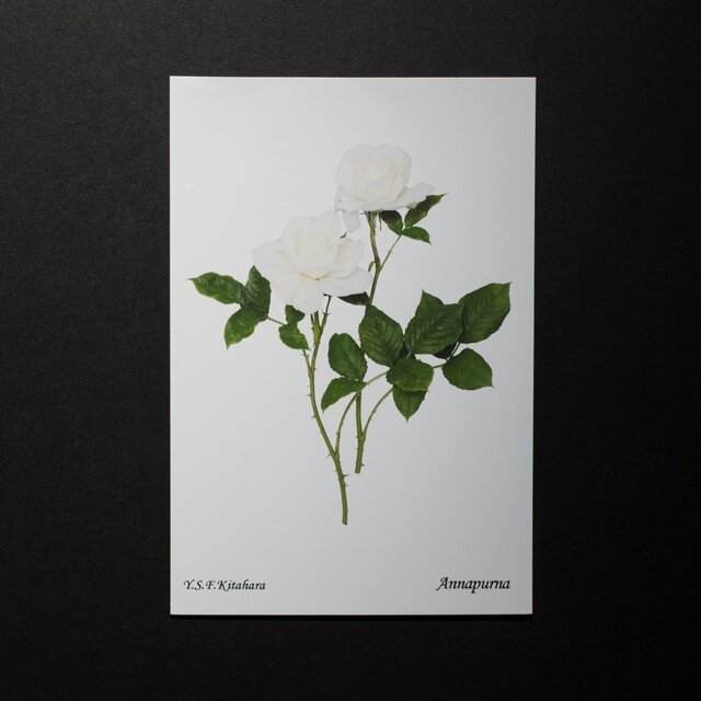 バラのポストカード アンナプルナ の画像1枚目
