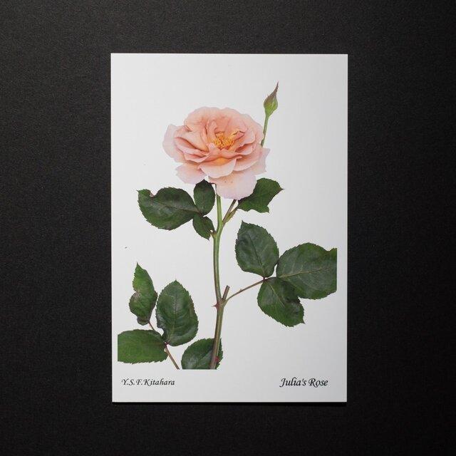 バラのポストカード ジュリアズ・ローズの画像1枚目