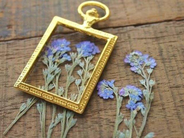 押し花【わすれな草(茎付)20個】10個×2袋自然ブルーの画像1枚目