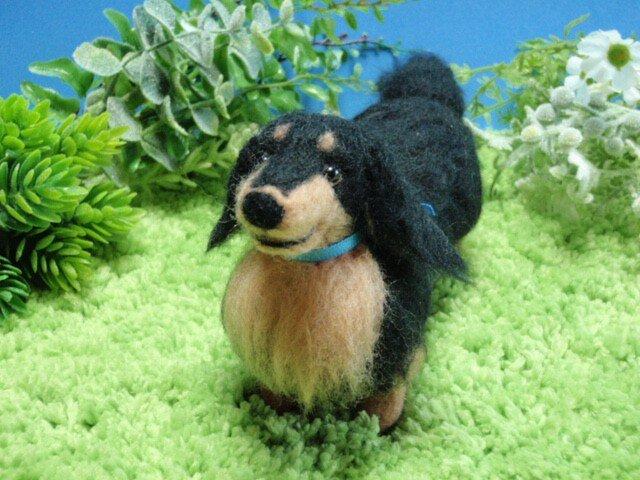 羊毛犬*ダックスフンド*黒タンの画像1枚目