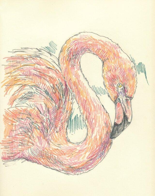 ※要写真 鳥もお描きします。ペットの似顔絵の画像1枚目