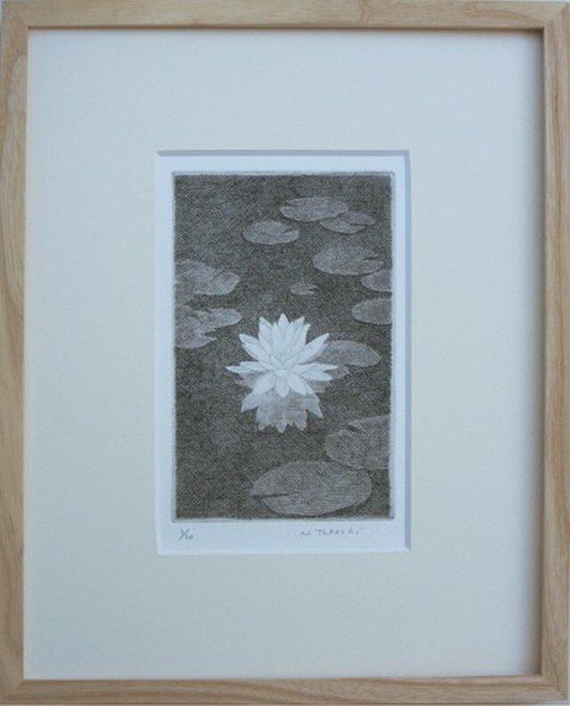スイレン・2012C / 銅版画 (額あり)の画像1枚目