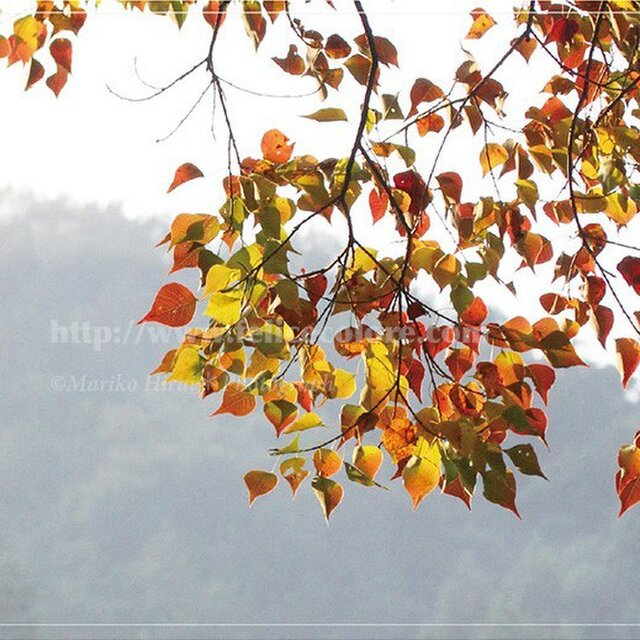 フォトパネル*【葉っぱのメロディー】の画像1枚目