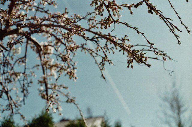 【額付写真】der Frühlingの画像1枚目
