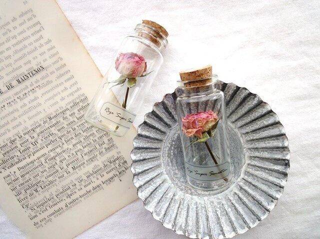 植物標本 Botanical Collection■No.R-13 バラ スーパーセンセーションの画像1枚目
