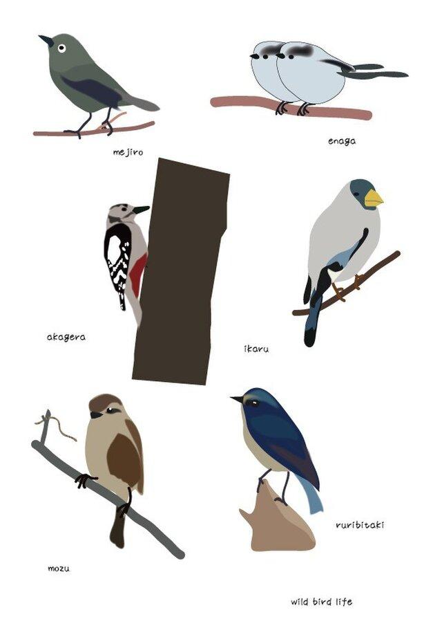 ポストカードセット 野鳥シリーズの画像1枚目