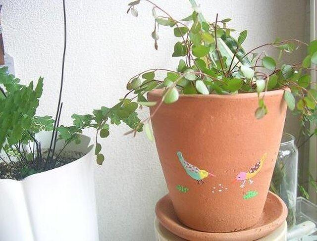 夏鳥の植木鉢の画像1枚目