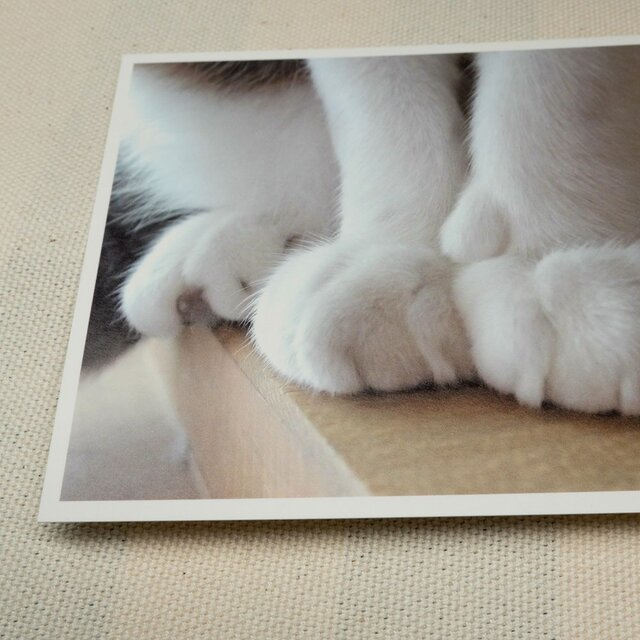 ポストカード ねこ 3枚 set01の画像1枚目