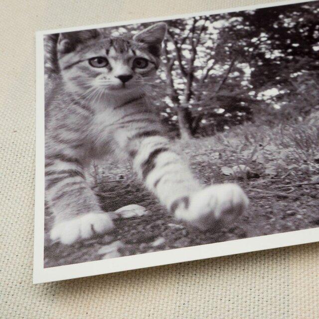 ポストカード ねこ 2枚 set04の画像1枚目