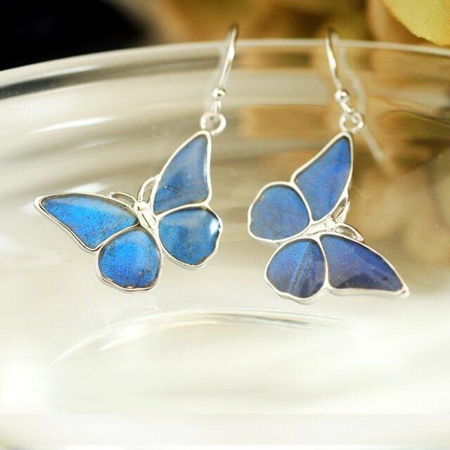 モルフォ蝶の小さなピアス SILVERの画像1枚目