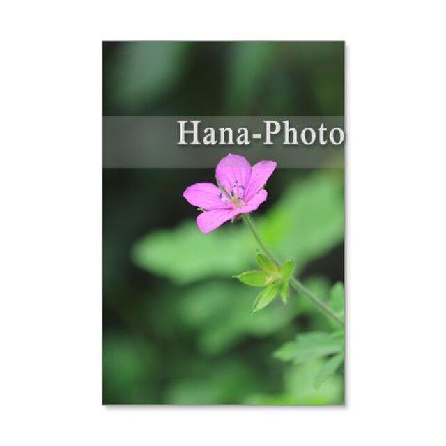 1190) フウロ草、ペンタス、ハナトラノオ、ランタナ  ポストカード5枚組 の画像1枚目