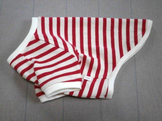 犬服 再販:小型犬用ラグランTシャツ(ボーダー)の画像1枚目