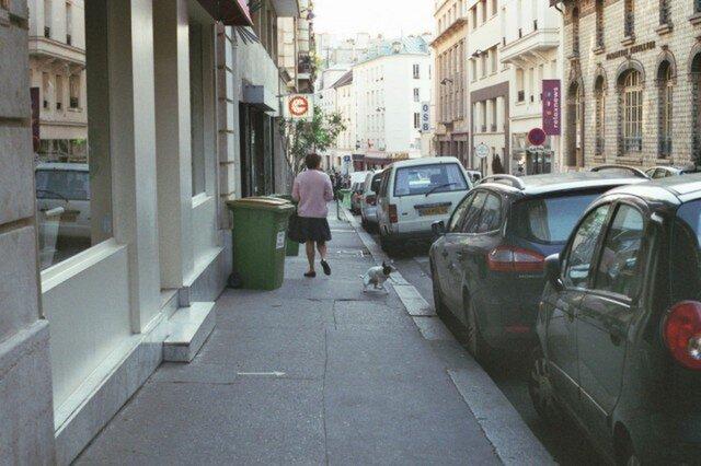 【額付写真】犬も歩けば、2。の画像1枚目