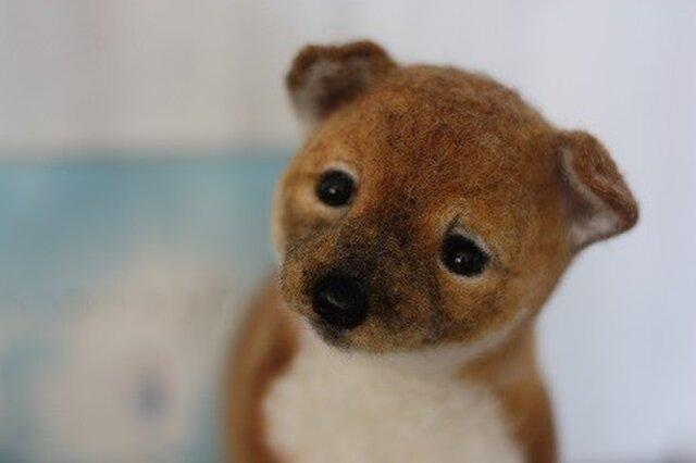 赤ちゃんだもん!!!コロコロ羊毛フェルト リアル柴仔犬の画像1枚目