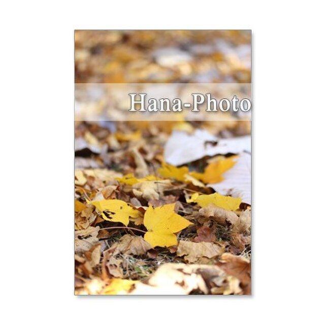 1193)紅葉、黄葉の葉たち   ポストカード5枚組 の画像1枚目