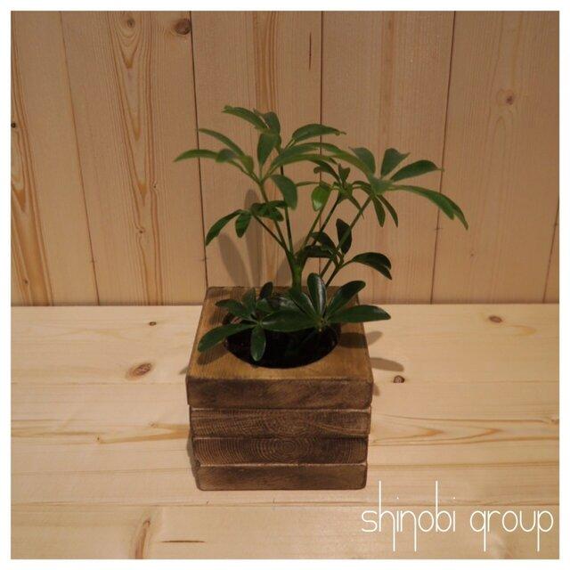 【ケーバブー】植木鉢 鉢 観葉植物 インテリア 小物入れ 雑貨の画像1枚目